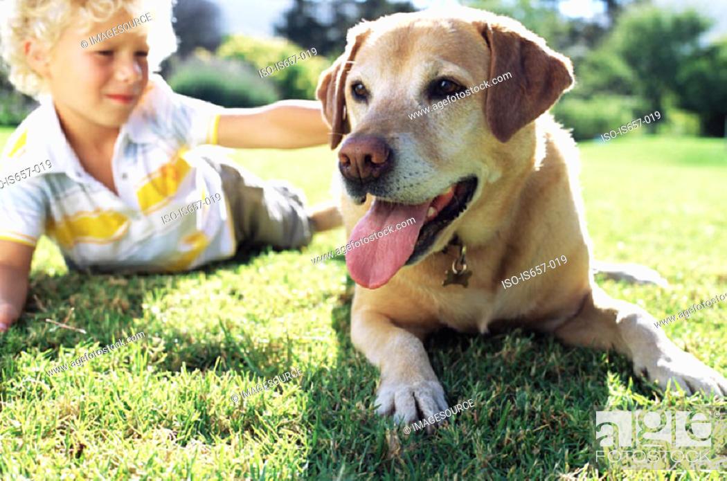Stock Photo: Boy with labrador.
