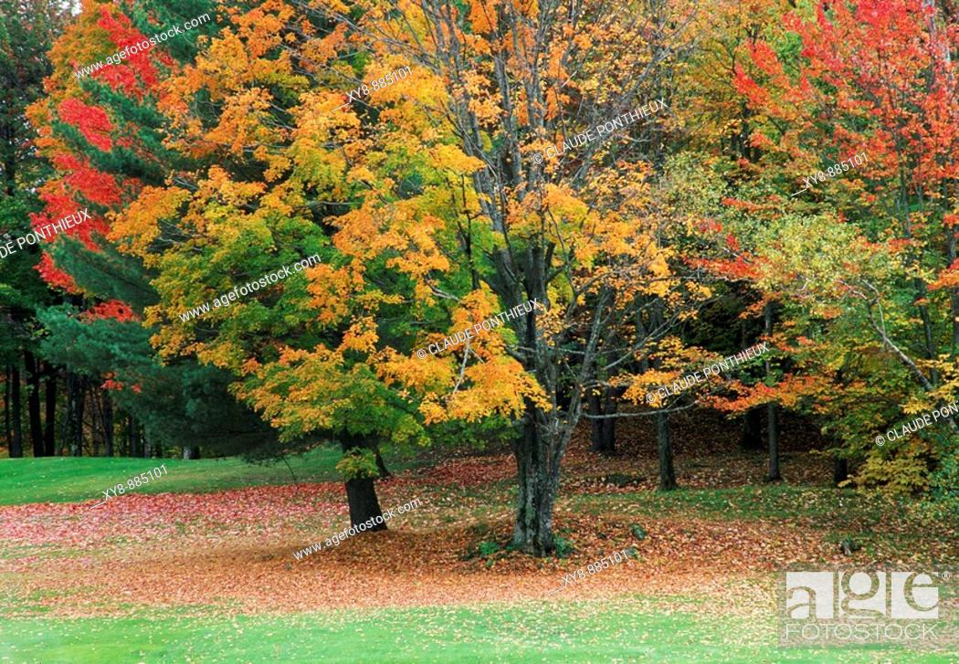 Stock Photo: Trees-Autumn-Colors.