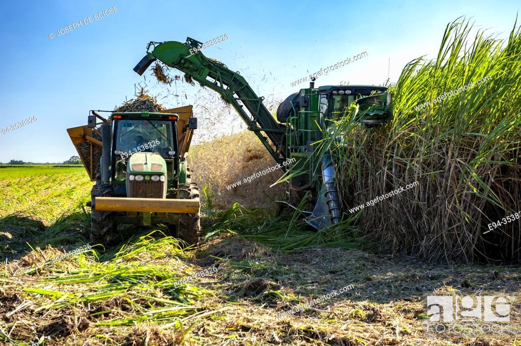 Stock Photo: Harvesting sugar cane in southern Louisianna.
