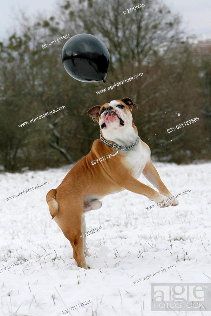 Stock Photo: Action in the snow.