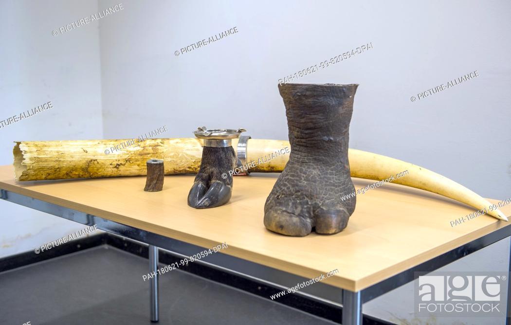 Imagen: 21 June 2018, Germany, Munich: A hollowed out elephant foot standing on a table next to other illegal animal products at the press conference with the Munich.
