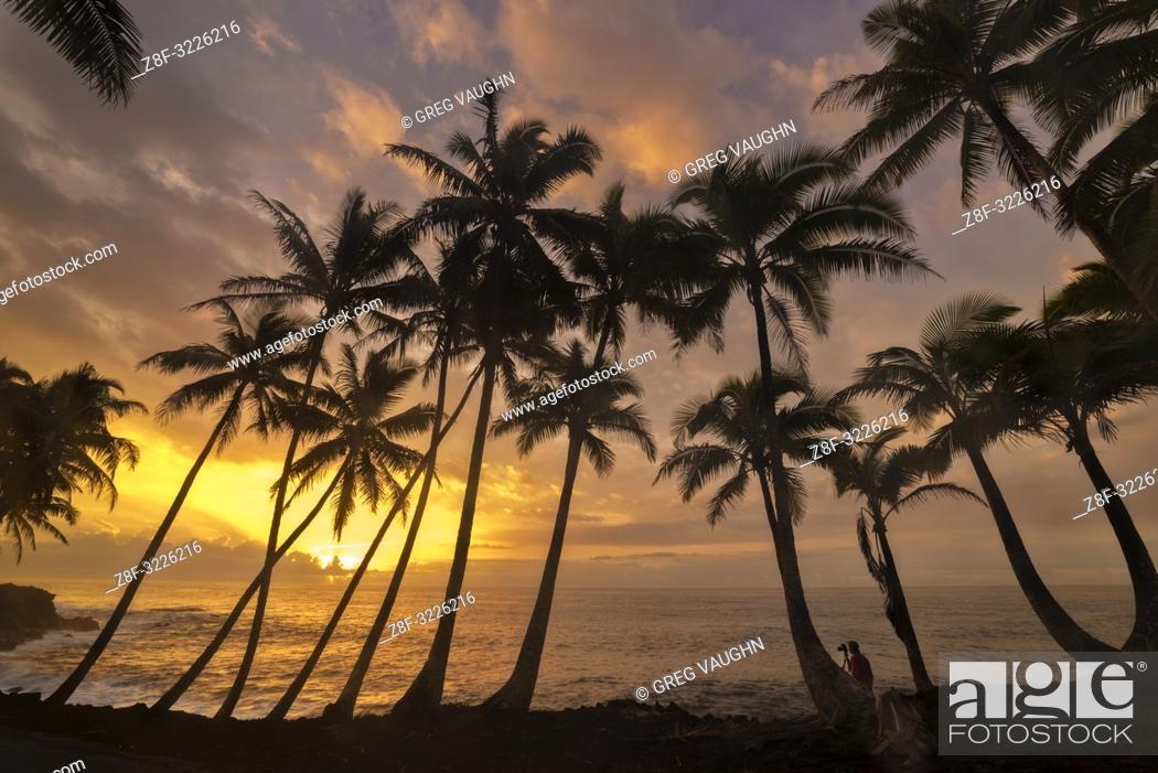 Imagen: Man photographing coconut palm trees and sunrise at Kama'ili on the Kalapana coast of the Big Island of Hawaii.