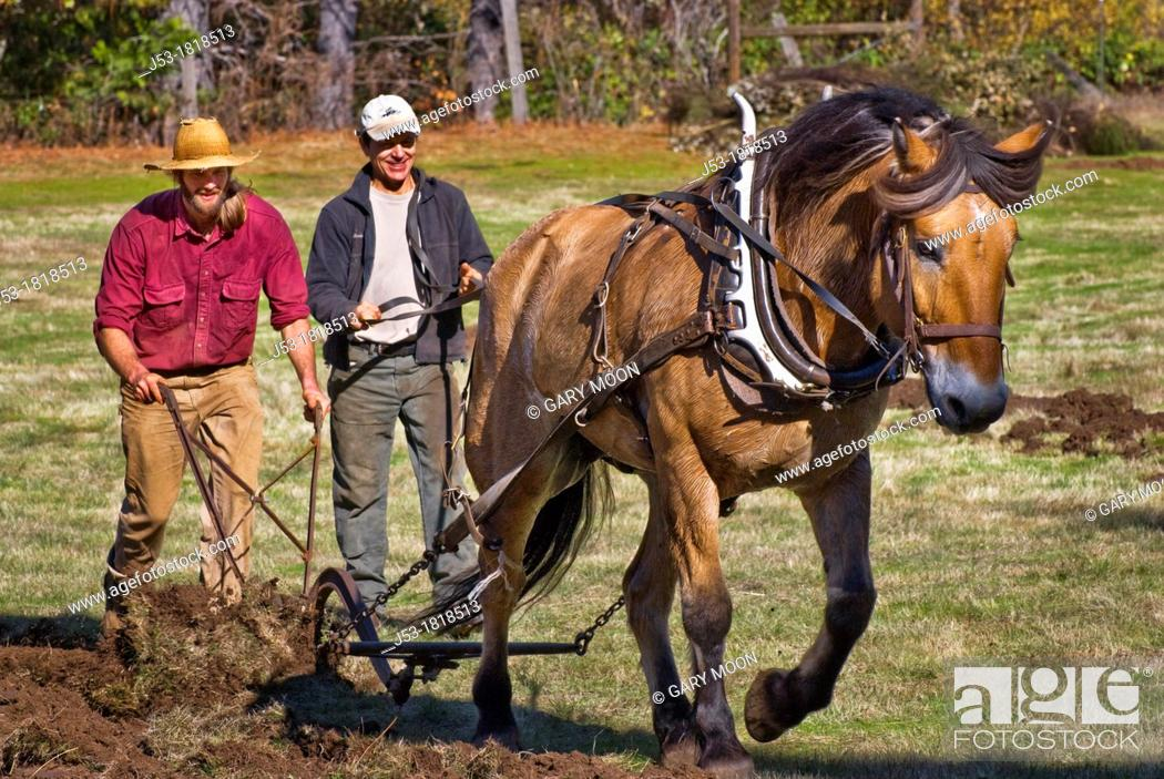 Stock Photo: Using draft horse to plow pasture into cropland, Burton Ranch, Nevada City, California.