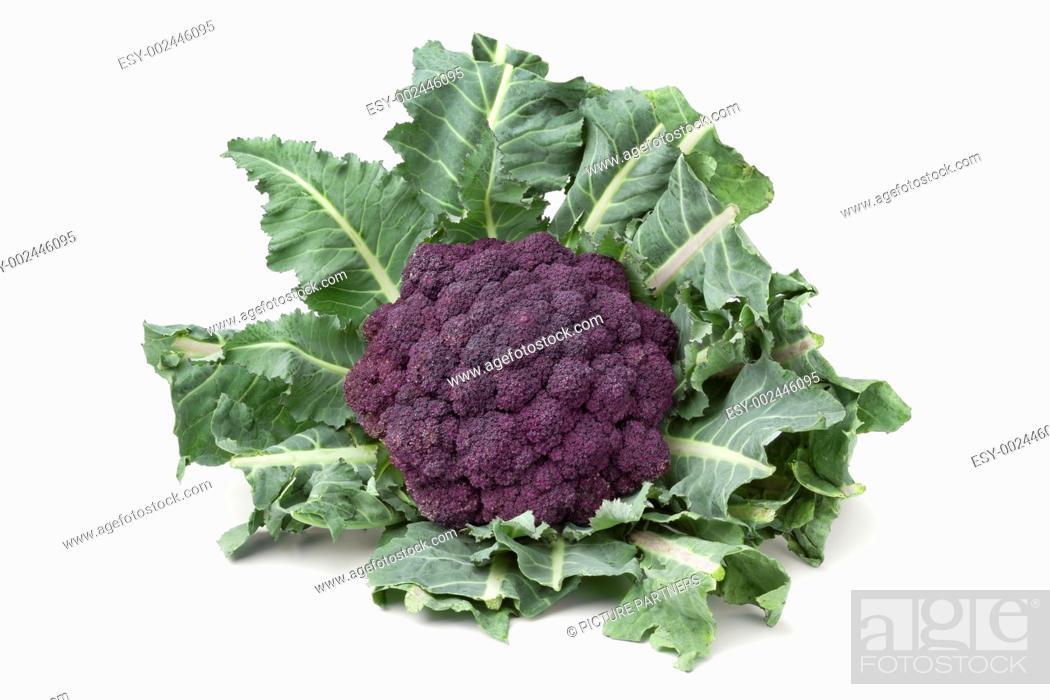 Photo de stock: Fresh purple broccoli on white background.