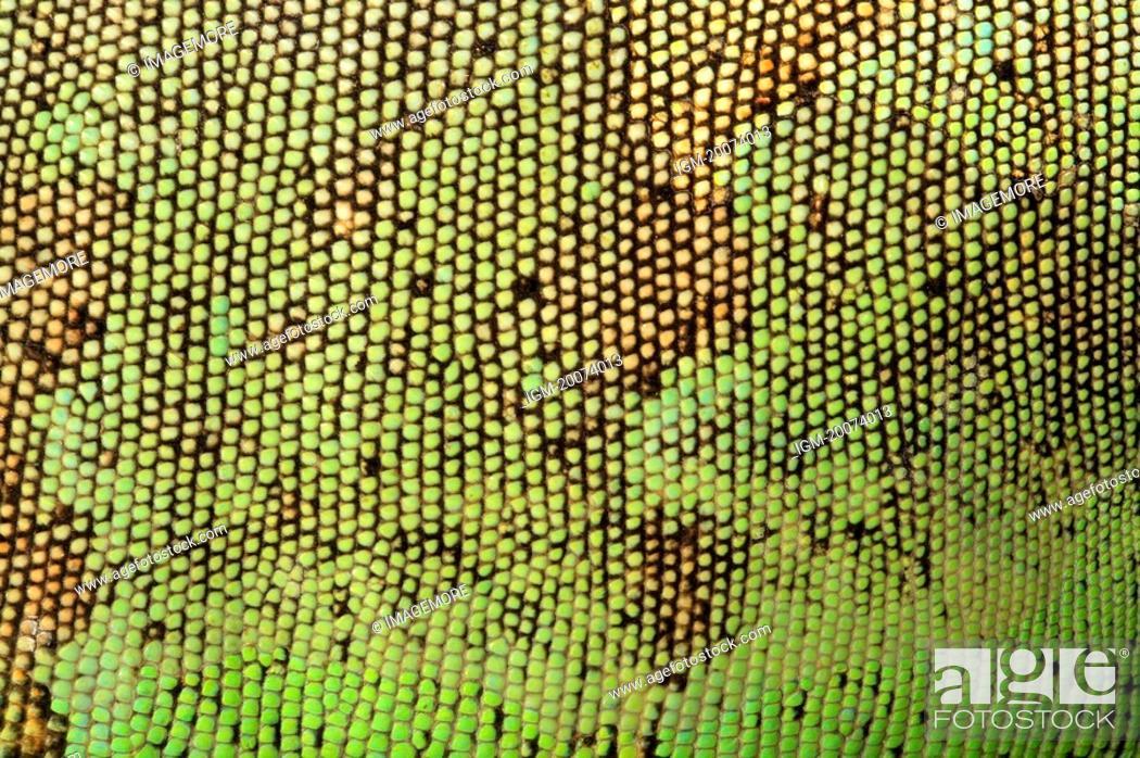Stock Photo: Lizard skin, full frame.