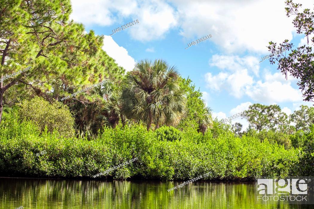 Stock Photo: Everglades, Fort Lauderdale, Florida, USA.
