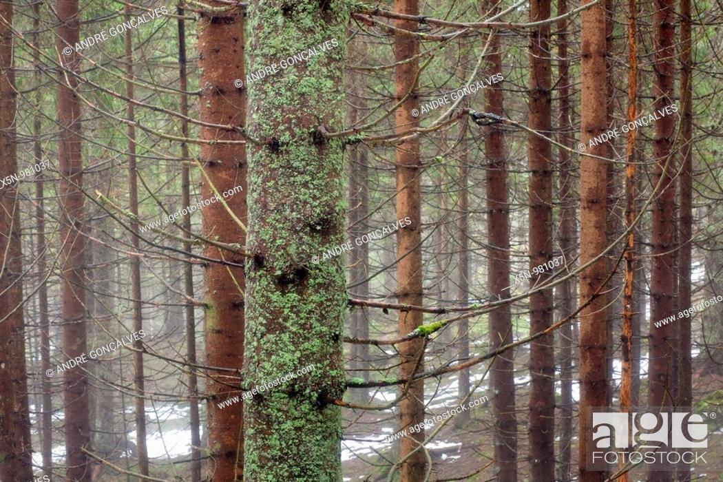 Stock Photo: German Forest in Winter.