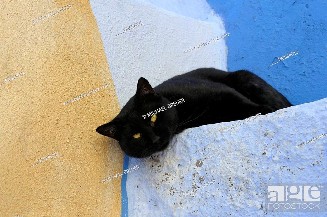 Stock Photo: Black cat, Santorini, Santorin, Oia, Greece, Cyclades, Cyclades islands.