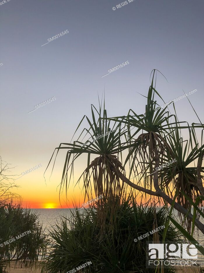 Stock Photo: Silhouettes of Pandanus spiralis at sunset, against the ocean in the Northern Territory of Australia.