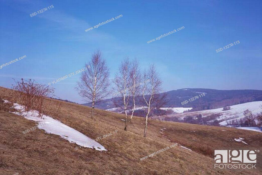 Imagen: Snow on a hill, Czech Republic.