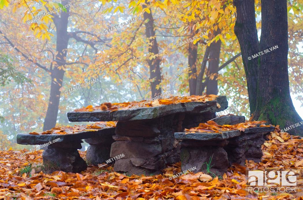 Stock Photo: Benches and table in autumn.