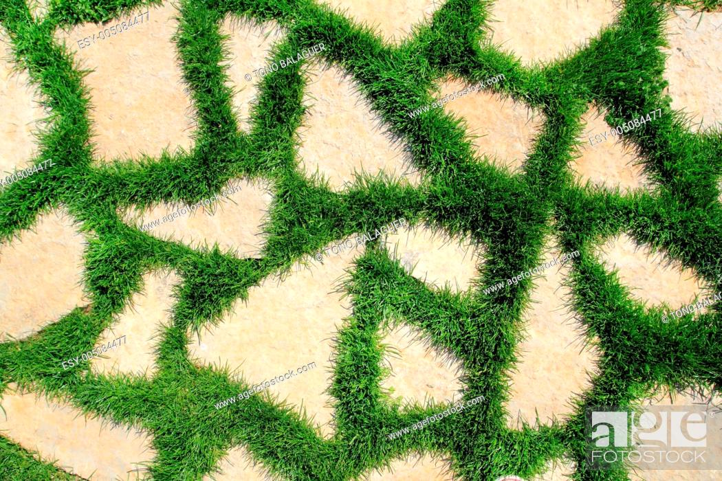 Imagen: stone path in green grass garden texture.