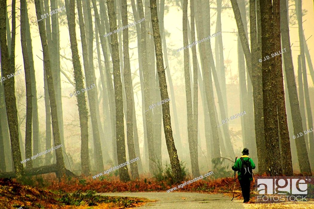 Stock Photo: Pilgrimage to Santiago de Compostela (Way of St James) between Vieux Lugo and Mons in the Landes forest. Gironde, Aquitaine, France.