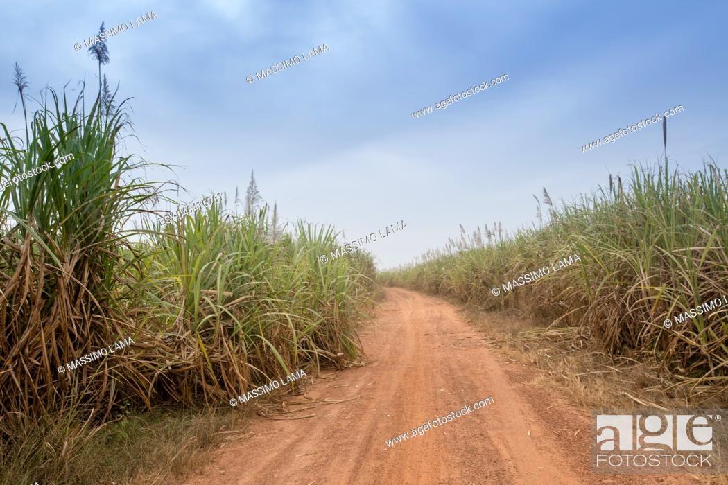 Imagen: Sugarcane cultivations in Cascades region, Burkina Faso.
