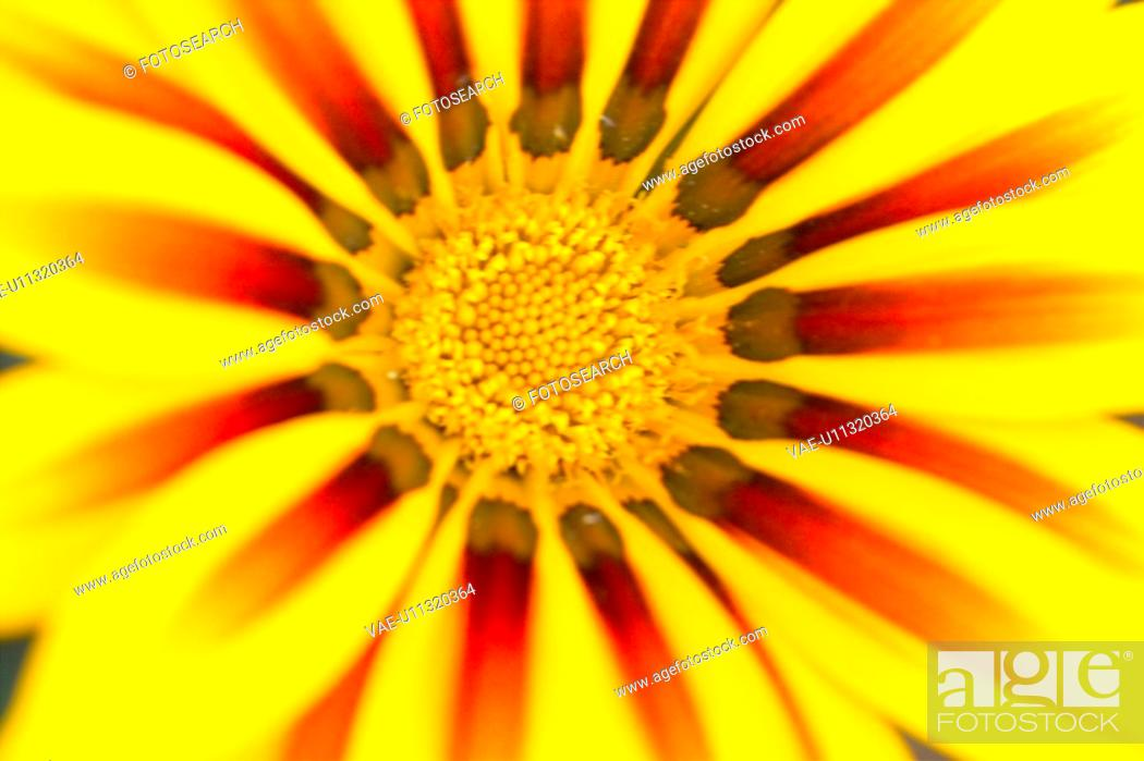 Imagen: blossom, flower, bloom, flowers, plants, yellow flowers, plant.