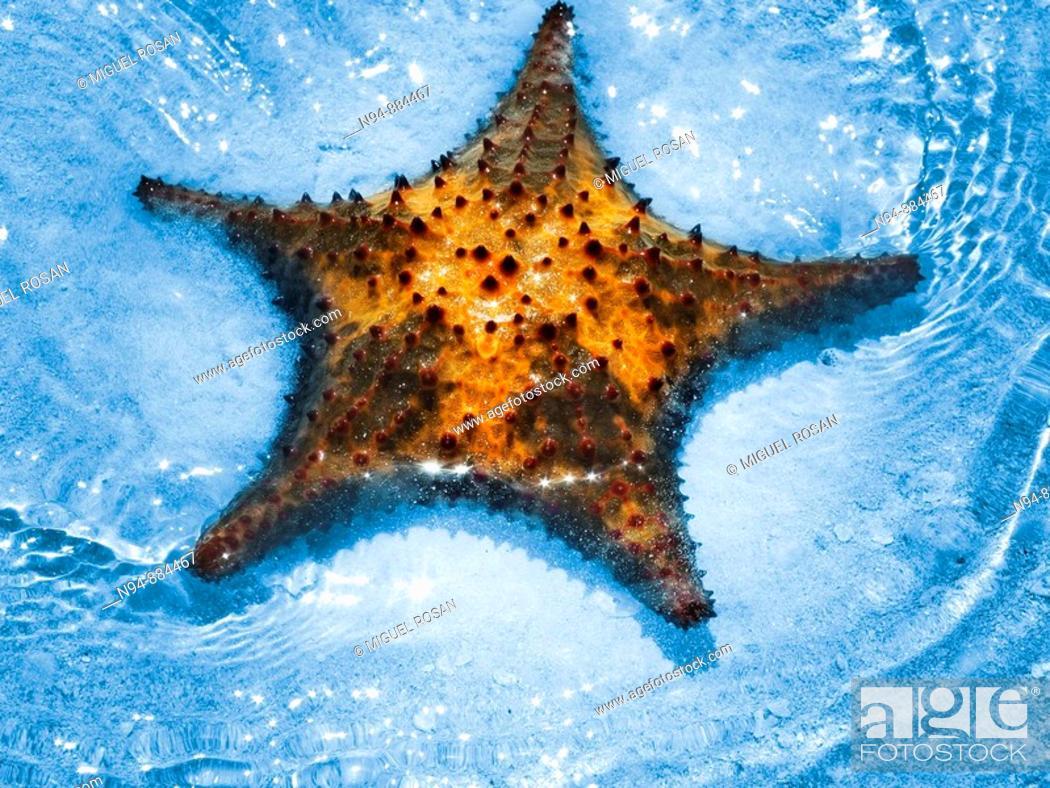 Stock Photo: Starfish.