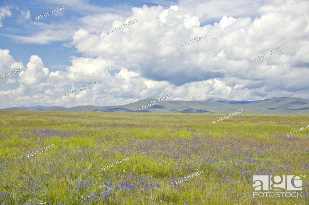 Stock Photo: Spring grasslands and mountains in Centennial Valley.