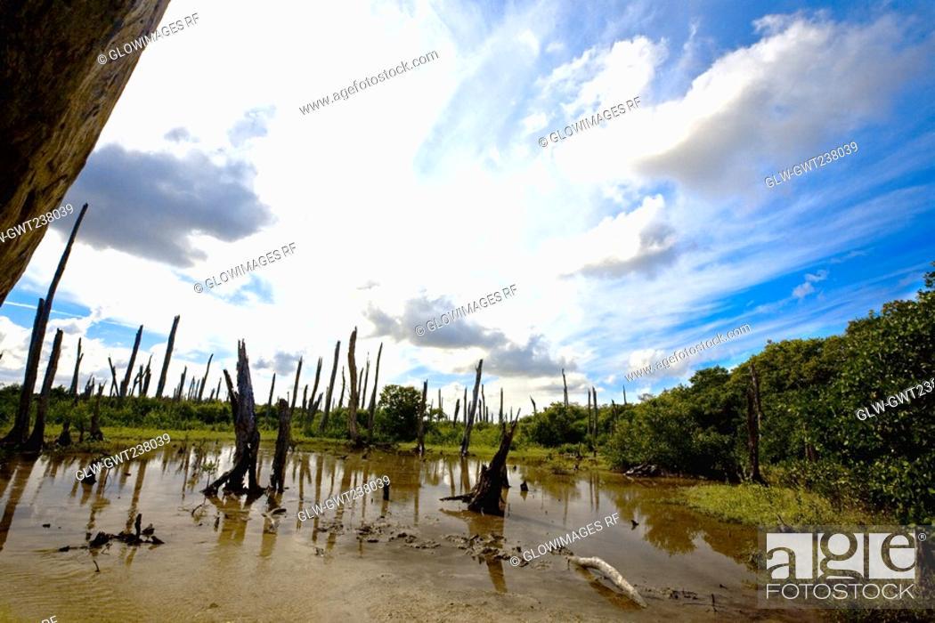 Stock Photo: Petrified trees in water, Tampeten, Celestun, Yucatan, Mexico.