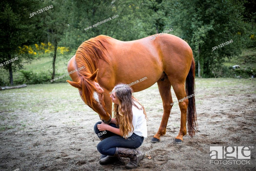 Stock Photo: A teenage girl crouching down to talk to and care for her horse; British Columbia, Canada.