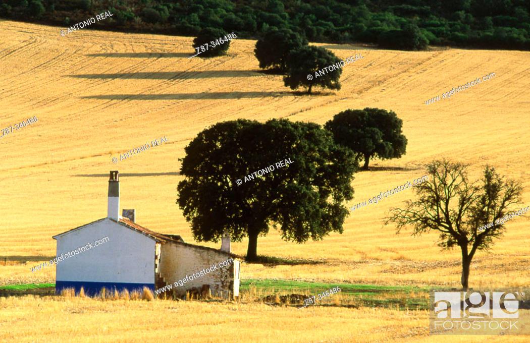 Stock Photo: La Mancha landscape near Santa Cruz de Mudela. Ciudad Real provincia, Spain.