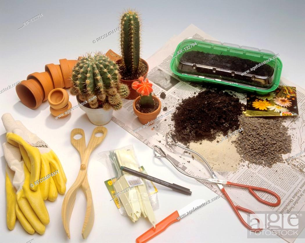 Stock Photo: cactus and different equipment for replanting.
