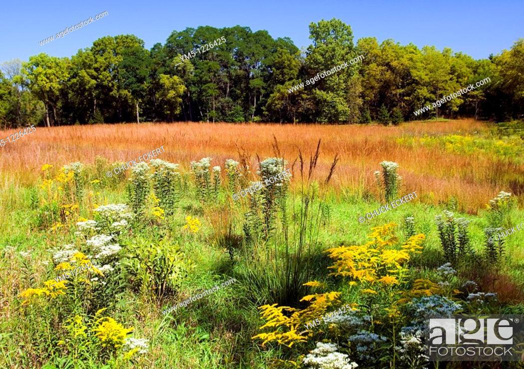 Stock Photo: Illinois Prairie Land.