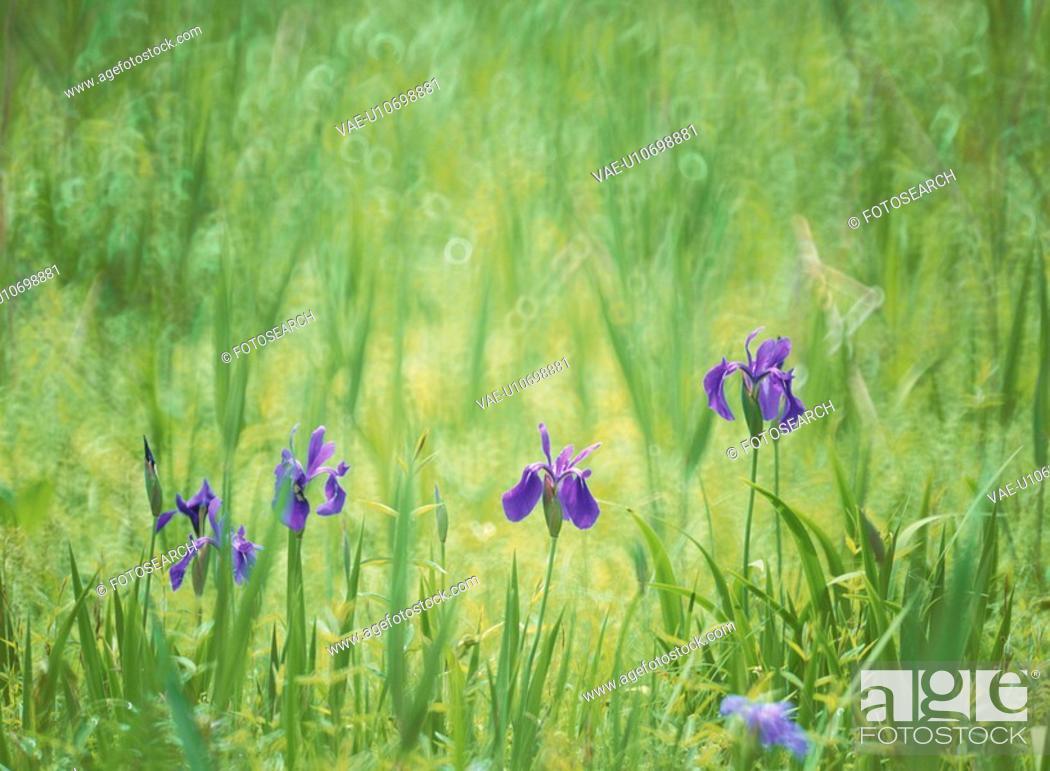 Photo de stock: Flower.