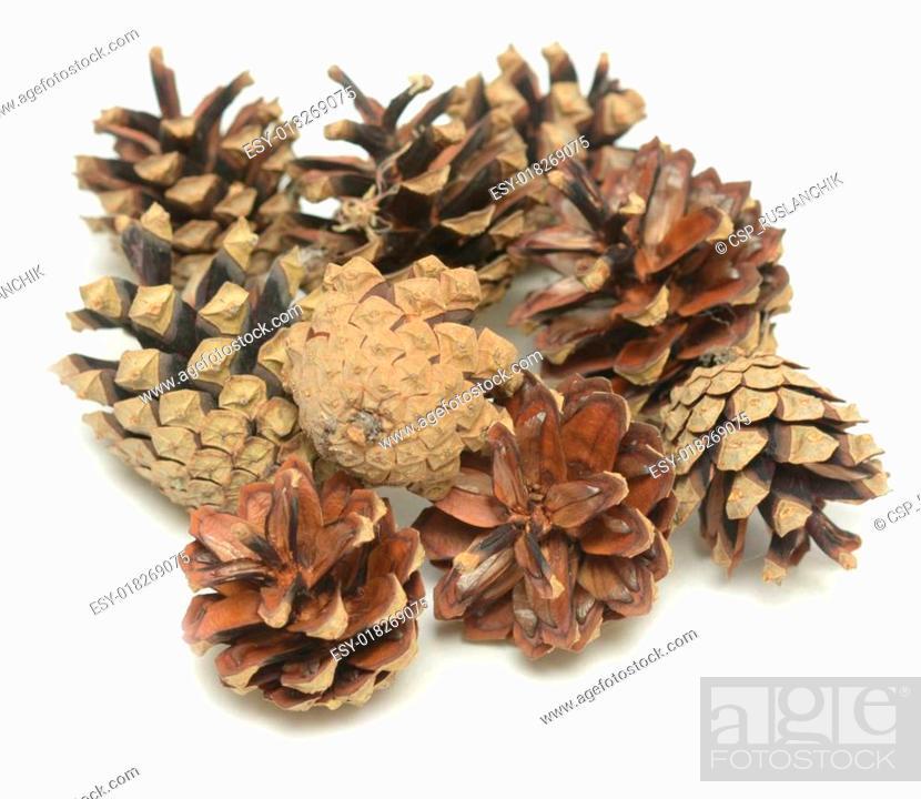 Stock Photo: pine cones.