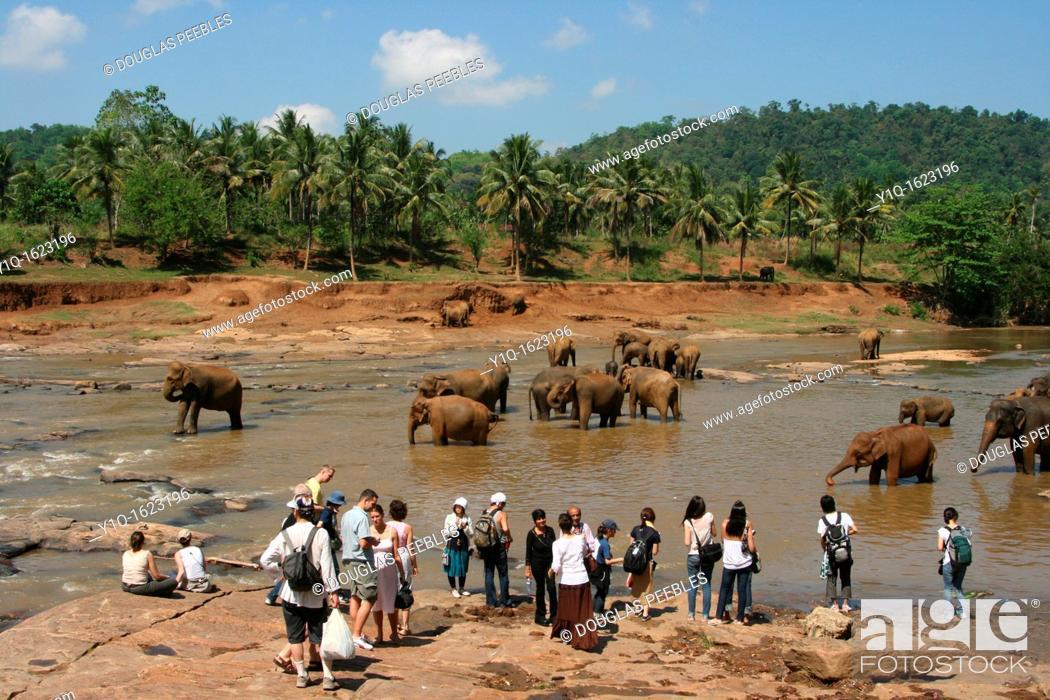 Stock Photo: Pinnewala Elephant Orphanage, Sri Lanka.