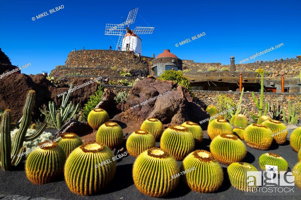 Imagen: Golden Barrel Cactus or Golden Ball (Echinocactus grusonii).