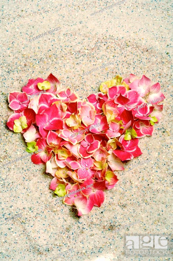 Stock Photo: Heart made of blossoms.