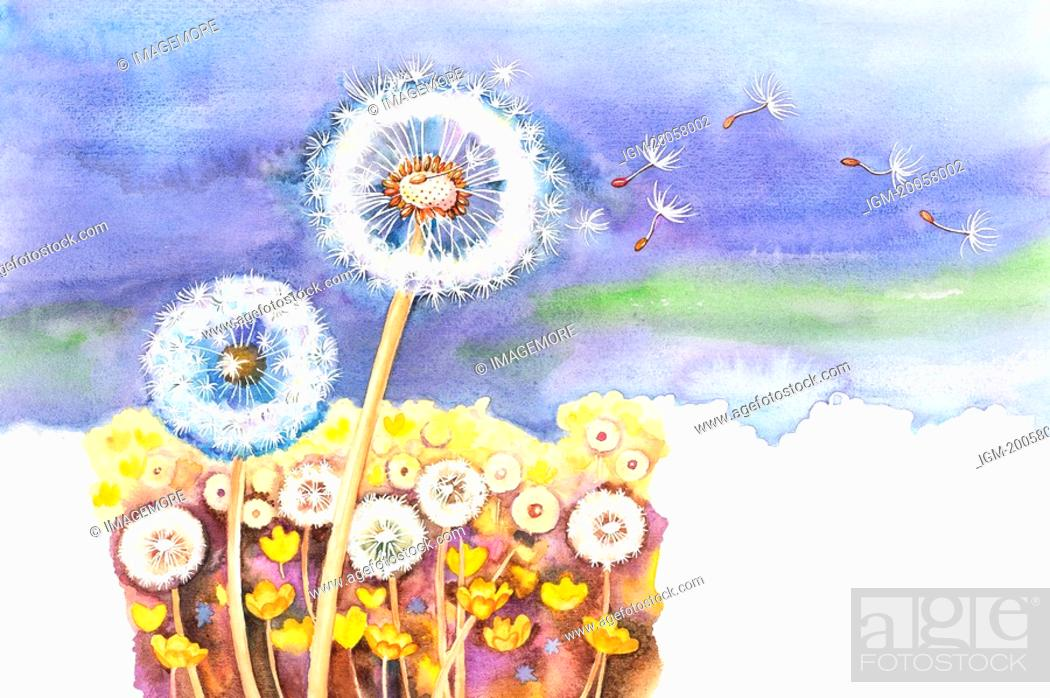 Stock Photo: Flower, Watercolor painting of dandelion in nature.