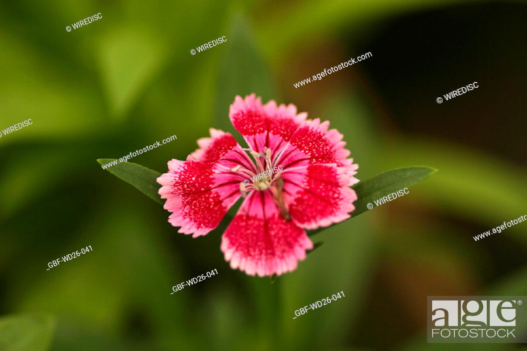 Stock Photo: Flowers, harpsichord, nature.