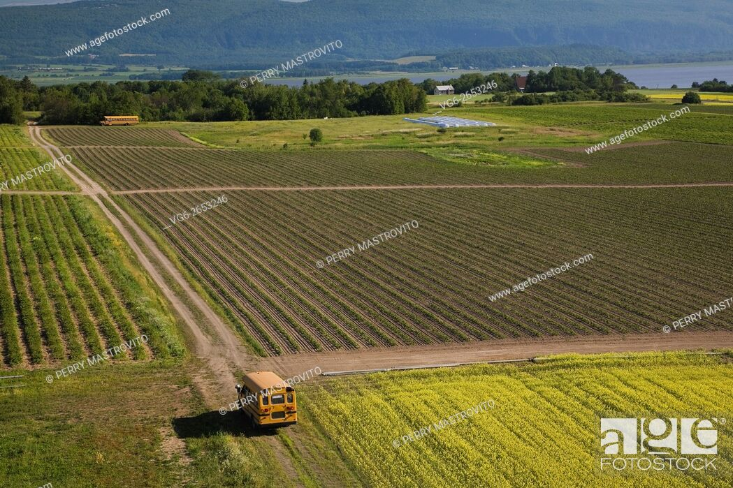 Stock Photo: High angle view of an agricultural crop field and yellow school buses in summer, Saint-Francois, Ile d'Orleans, Quebec, Canada.