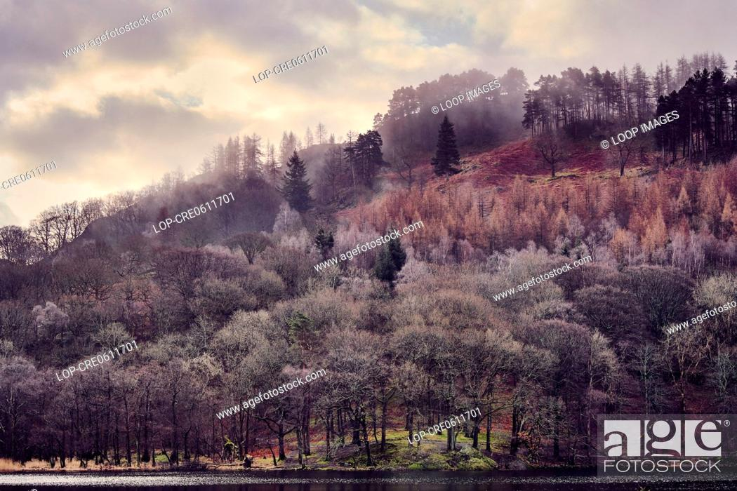 Stock Photo: Misty trees in the morning on Rydal Water in the Lake District.
