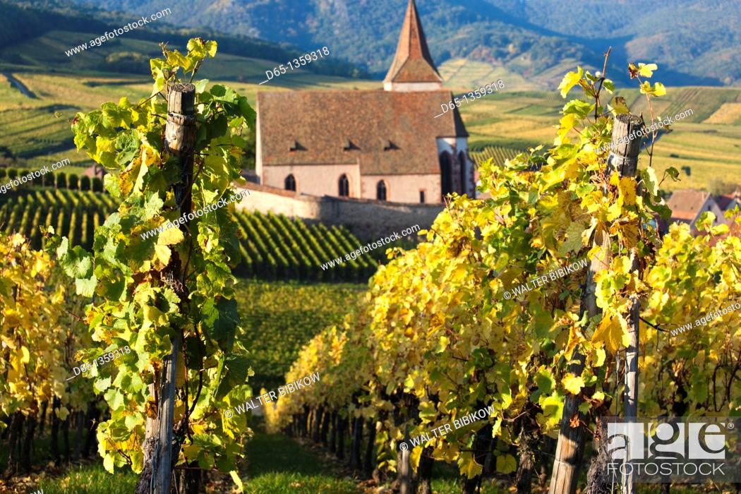 Stock Photo: France, Haut-Rhin, Alsace Region, Alasatian Wine Route, Hunawihr, town church and vineyards, autumn.