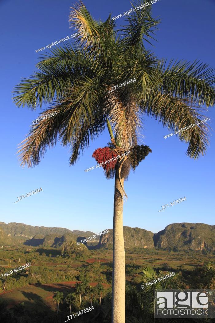 Stock Photo: Cuba, Vinales Valley, Valle de Vinales, mogotes, limestone cliffs, .