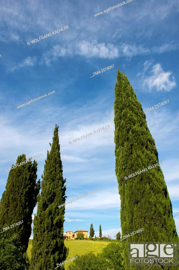 Stock Photo: Landscape with Italian cypress trees (Cupressus sempervirens) in the Val d'Orcia near Pienza in Tuscany, Italy.