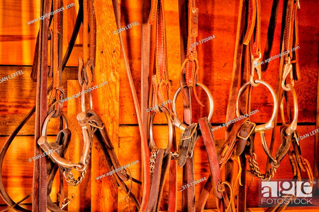 In the Tack Room, Stock Photo, Picture And Rights Managed