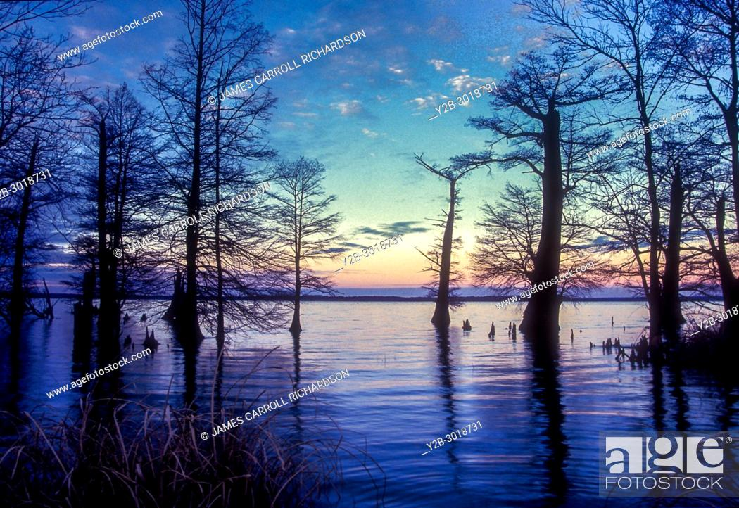 Stock Photo: Sunset at Reelfoot Lake in Tennessee.