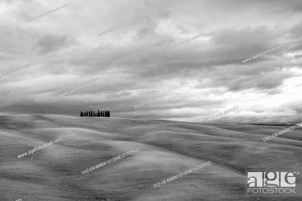 Stock Photo: Rolling hills with wheat fields and cypress trees, Val d'Orcia, Tuscany, Italy.