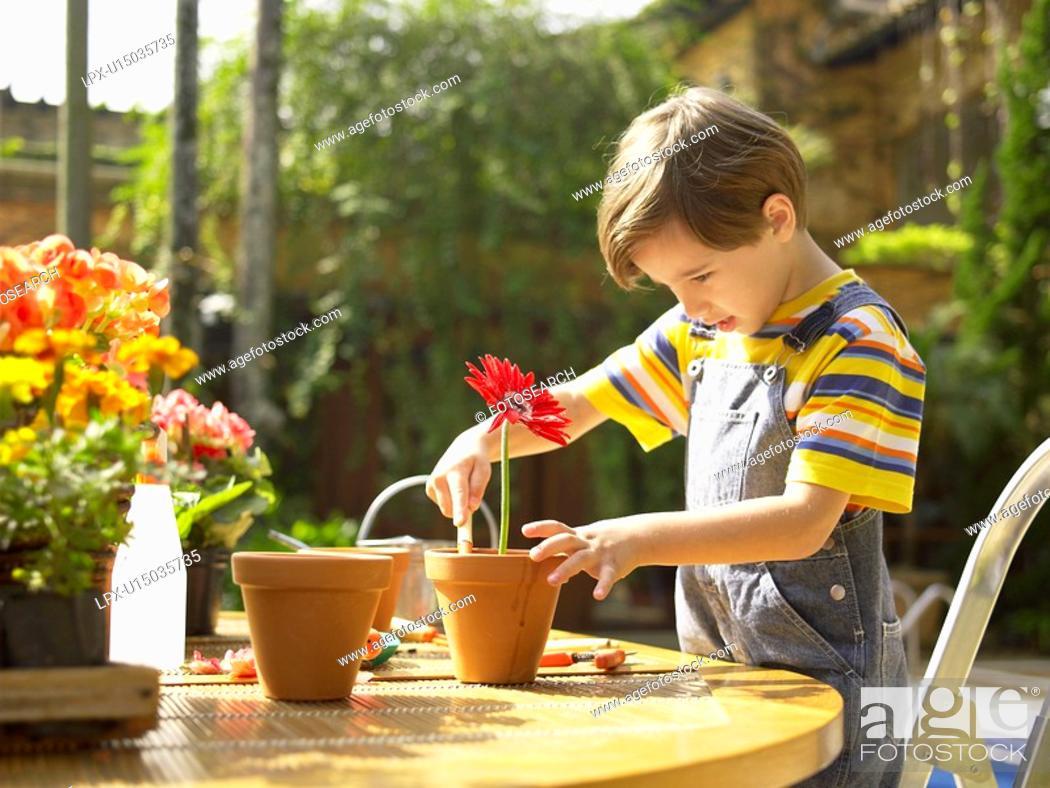 Stock Photo: Boy planting flowers.