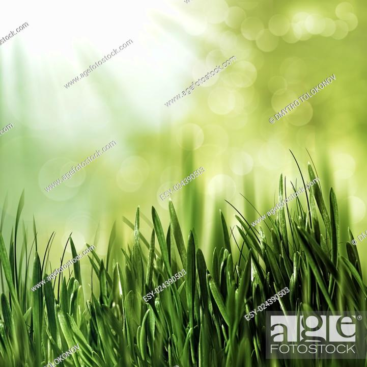 Stock Photo: Beauty natural backgrounds with green grass and natural bokeh.