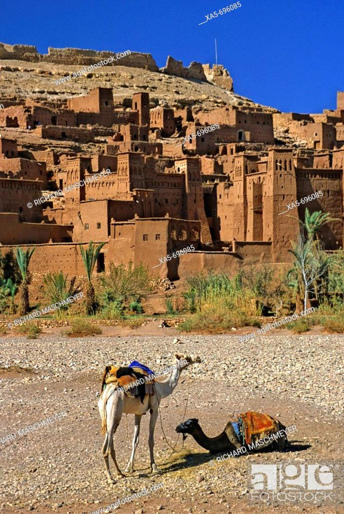 Stock Photo: Morocco, near Quarzazate, Ait Benhaddou, Exotic Kasbah, Camels in Foreground.