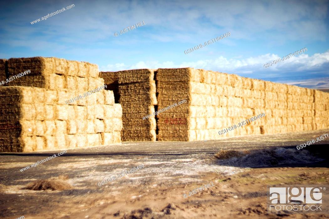 Stock Photo: Haystacks in rural Landscape.