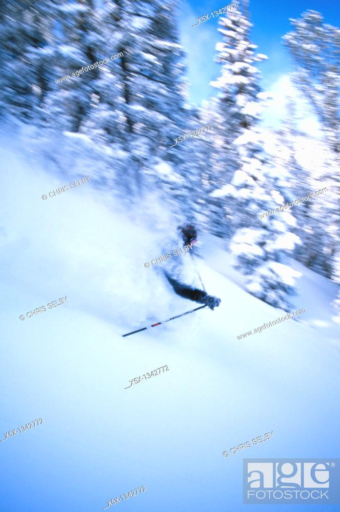 Stock Photo: Skier in powder snow in Red Lodge, Montana, USA.