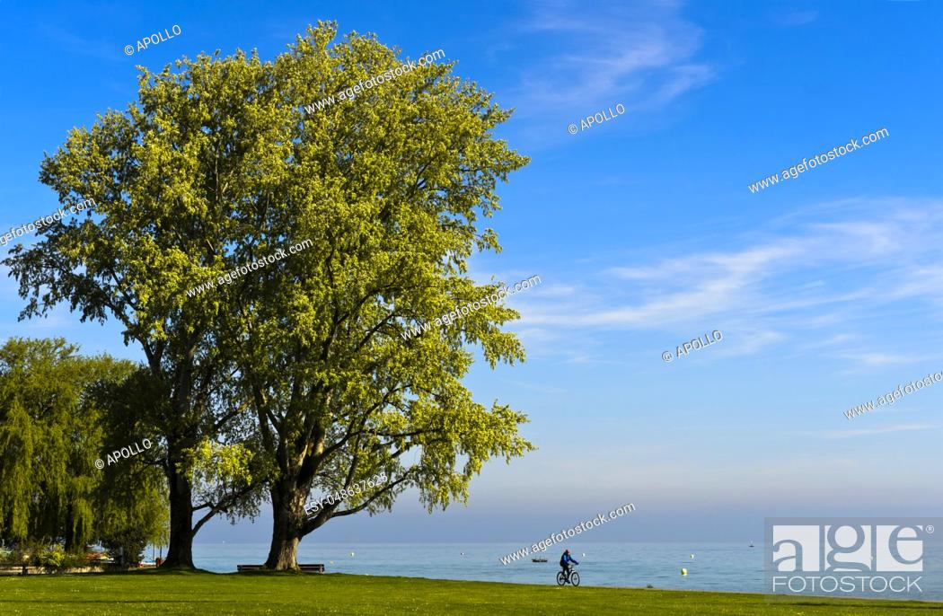 Stock Photo: Biker in a park at Lake Constance, Arbom, Switzerland.