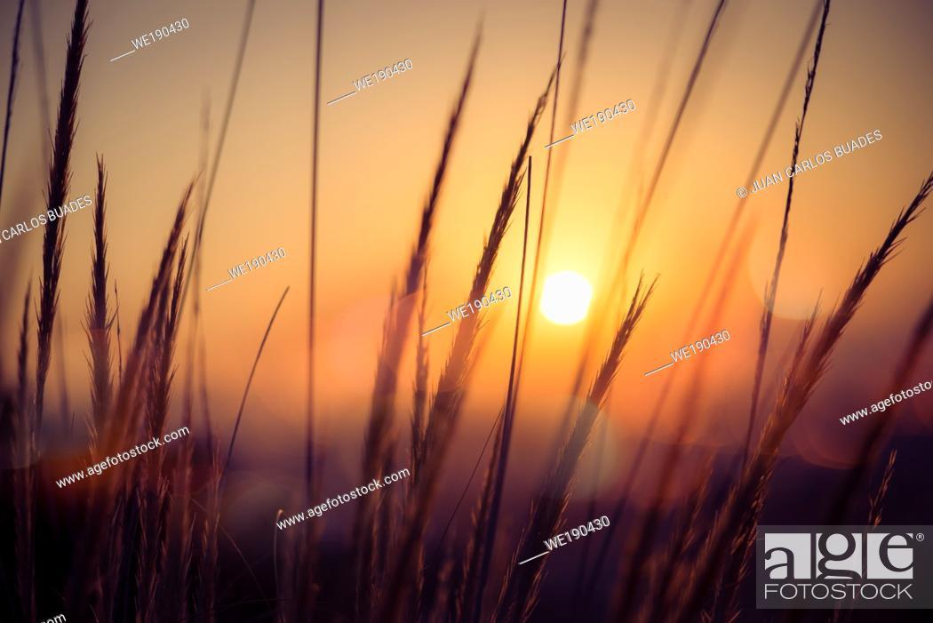 Imagen: Golden sunrise in the Doñana Nature Park.