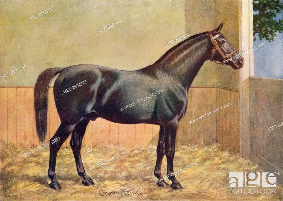 Stock Photo: Yorkshire Coach Horse stallion Crown Prince, 1902 (c1910). Artist: Henry Powell Palfrey.
