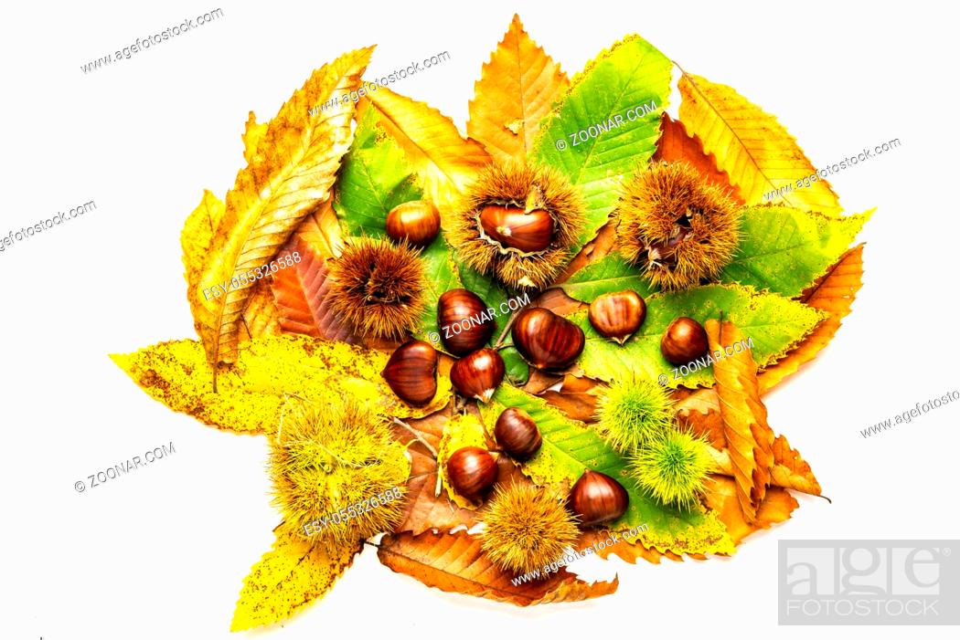 Stock Photo: Chestnuts isolated on white background with leaves. Top view. Autumn concept.